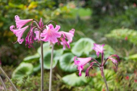 Blumen im Auckland Domain Park