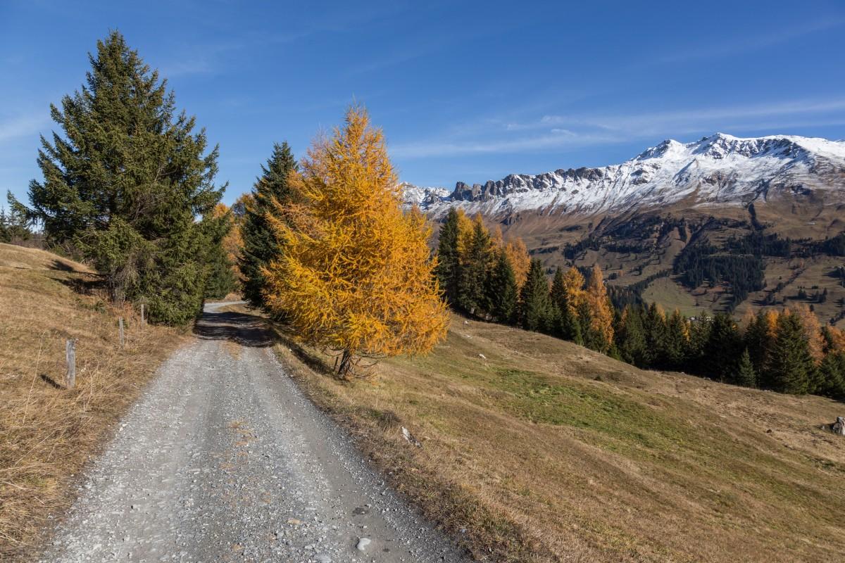 Wanderweg nach Parpan im Herbst