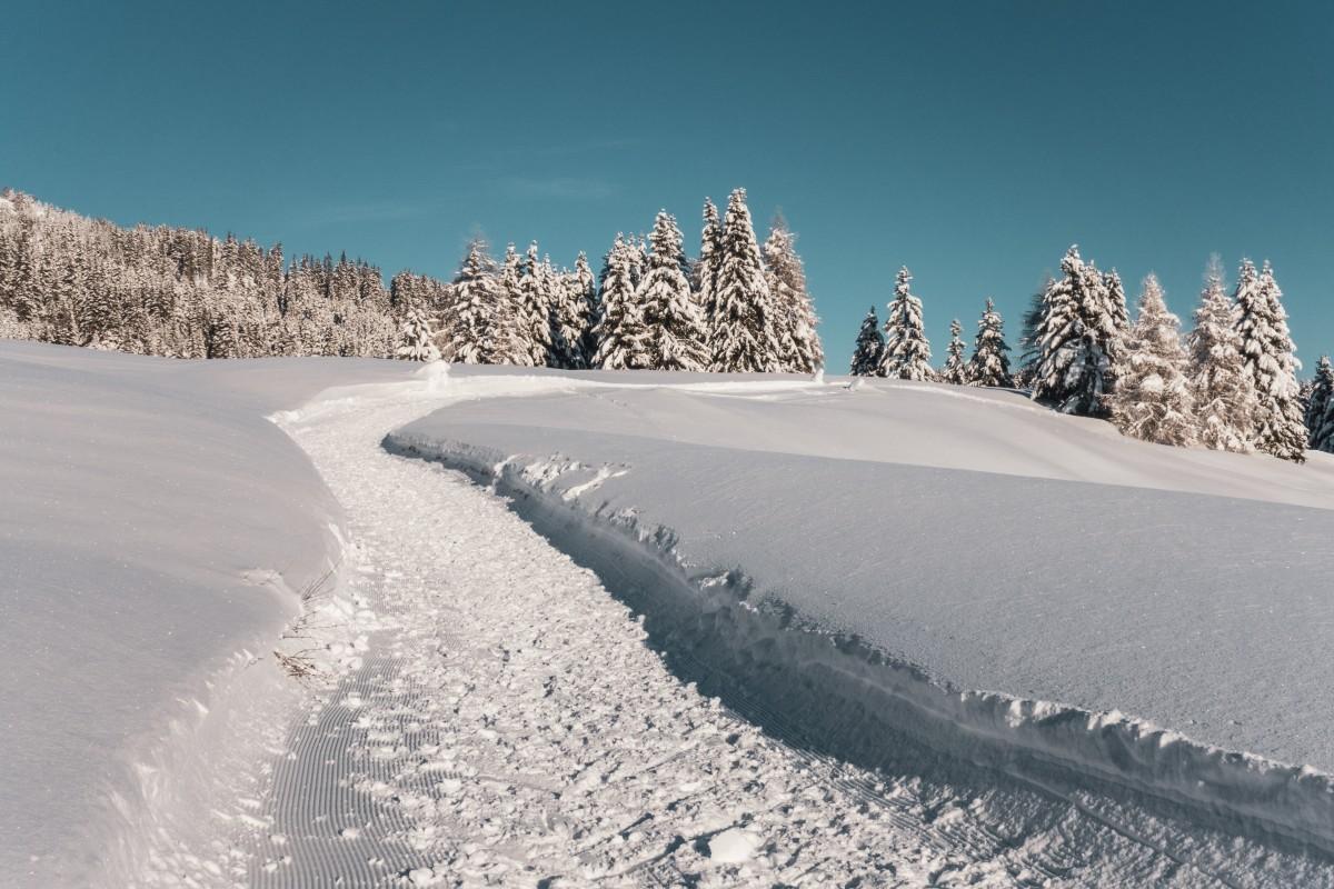 Winterwandern in Parpan in Graubünden