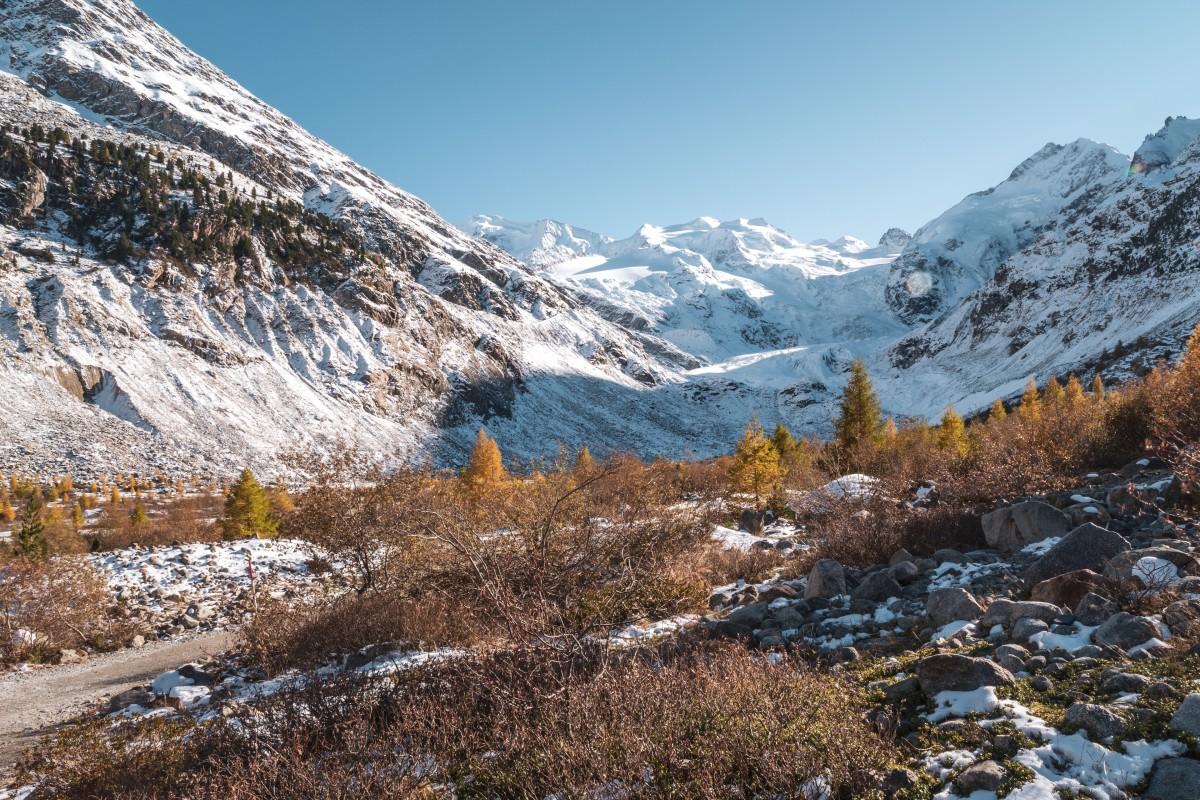 Morteratsch-Gletscher und Lärchen