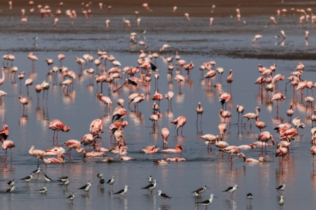 Vögel im Lake Manyara National Park