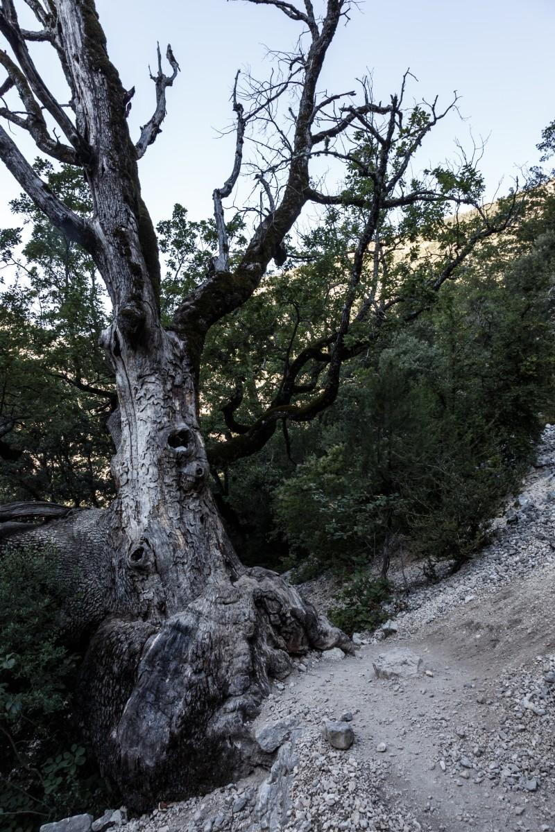 Abstieg vom Chalet de la Maline in die Gorges du Verdon