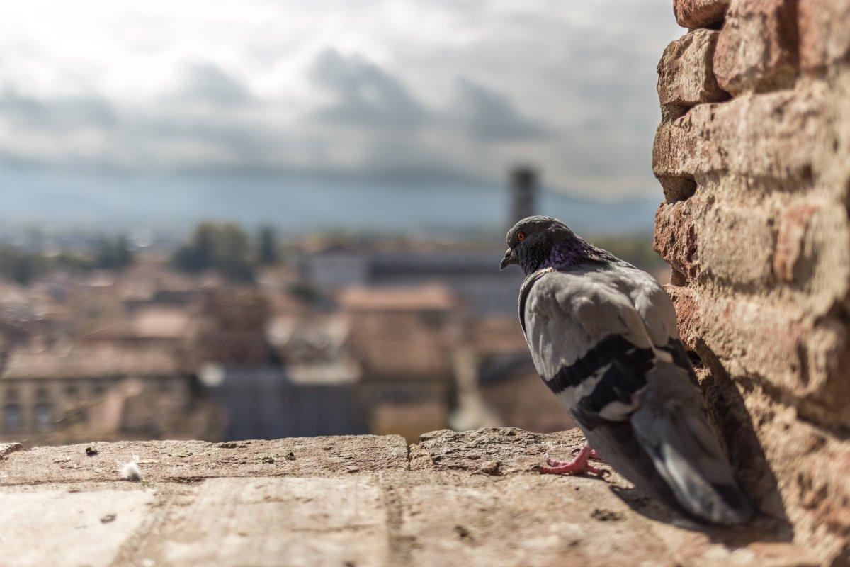 Ausblick von einem Turm auf Lucca