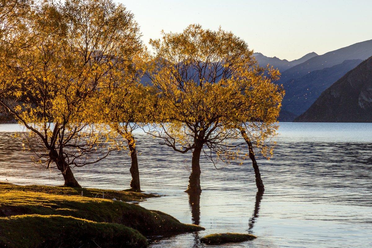 Bäume im Lake Wanaka im Abendlicht
