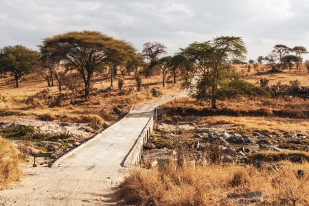 Tarangire National Park in Tansania