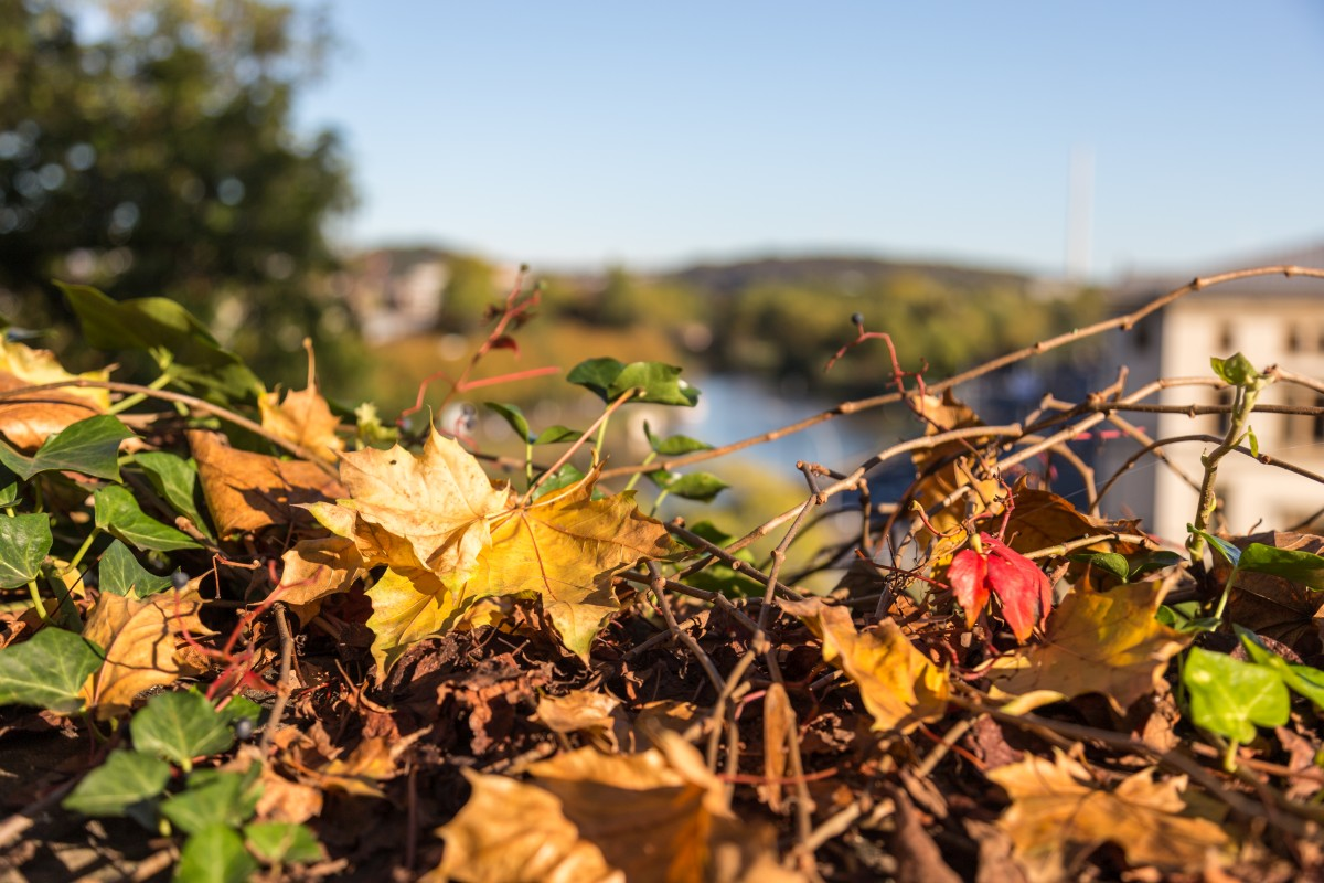 Herbst am Saarbrücker Schloss mit Blick auf die Saar