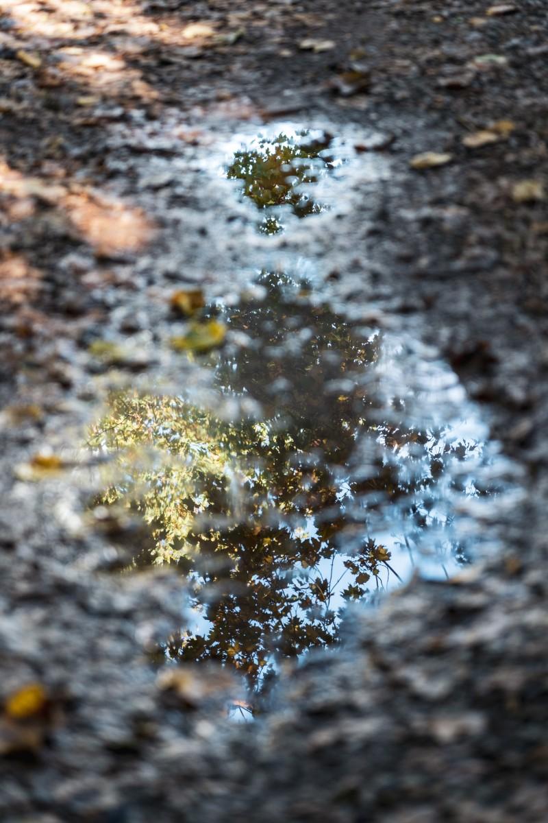 Spiegelung im Herbst bei Nonnweiler