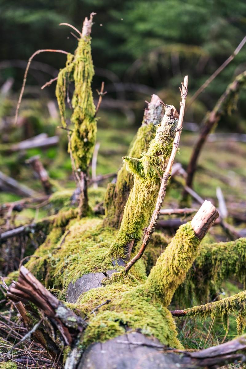 Moos im Wald bei der Talsperre Nonnweiler