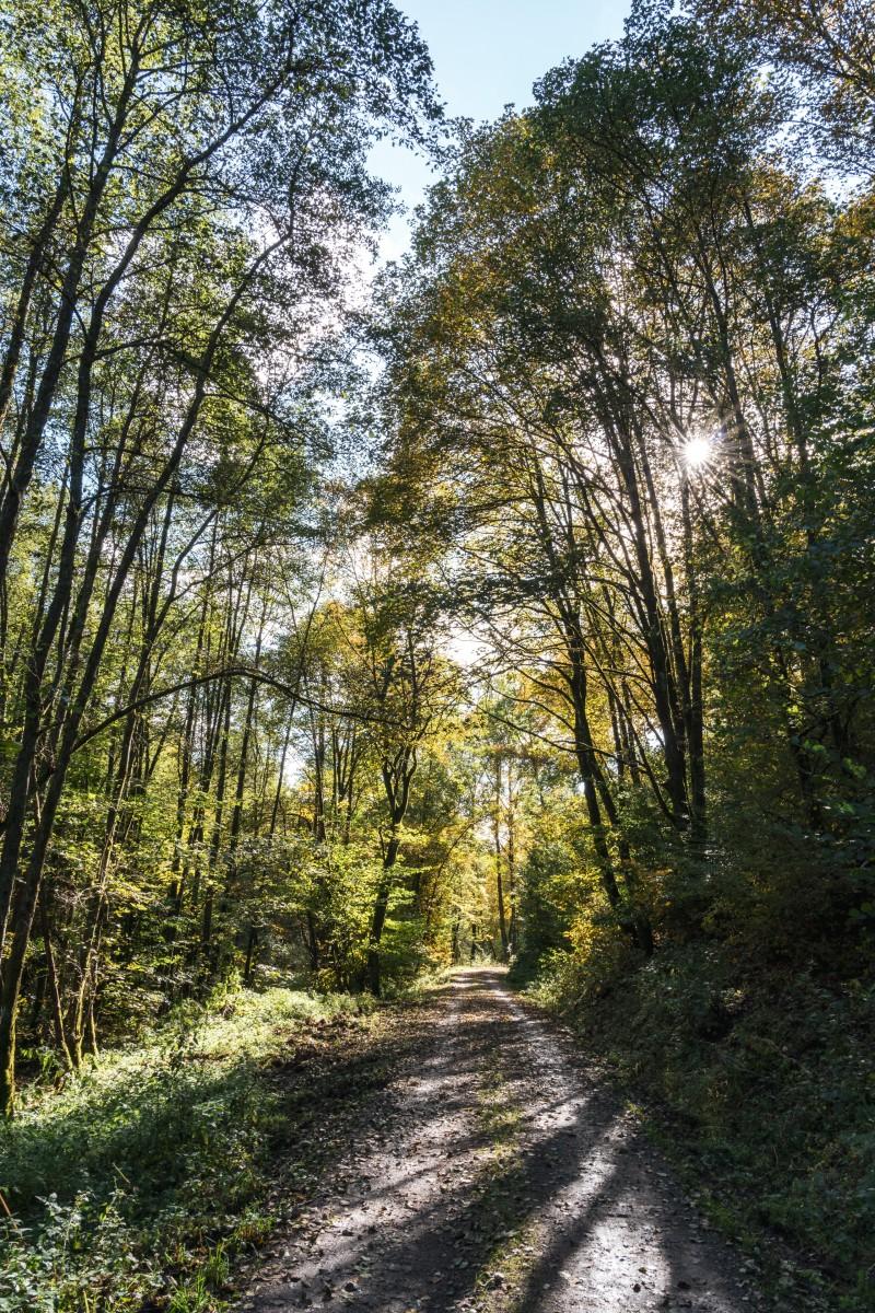 Traumschleife Hubertusrunde Nationalpark Nonnweiler