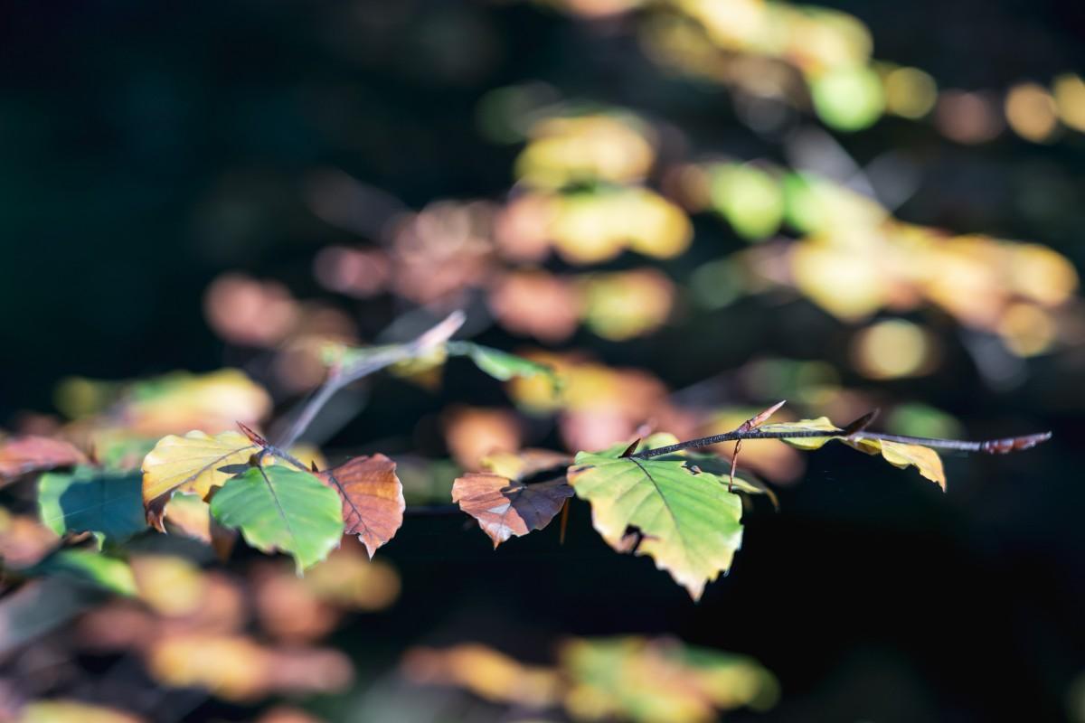 Herbstfarben im Hochwald