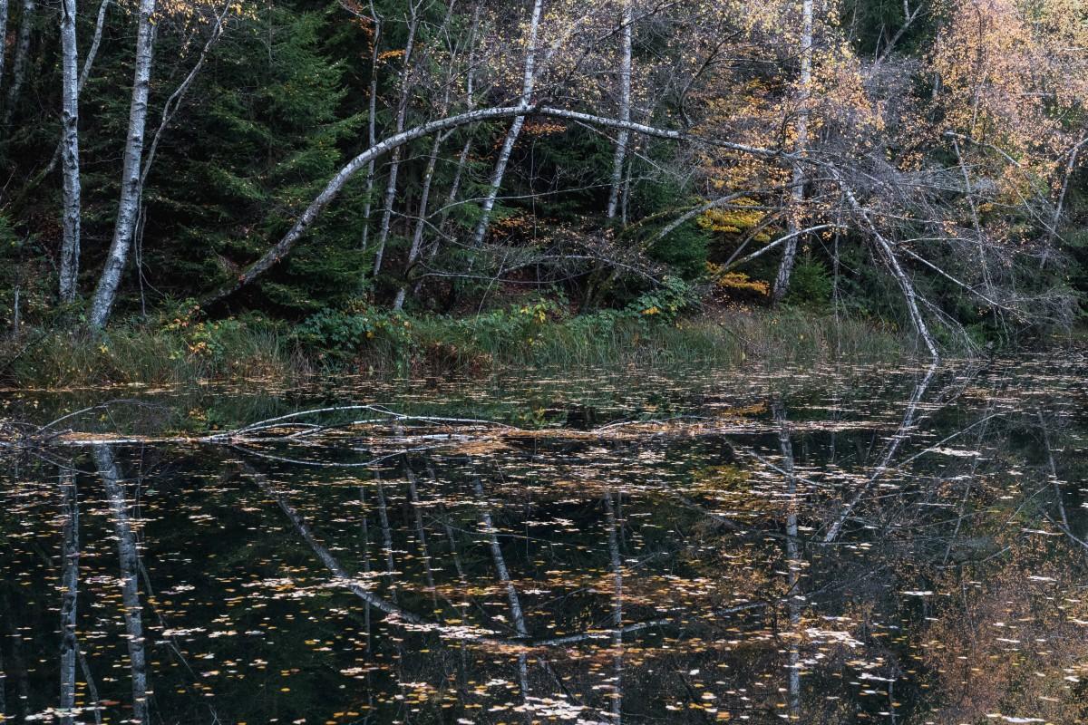 Herbststimmung mit Spiegelung am Herberloch bei Weiskirchen