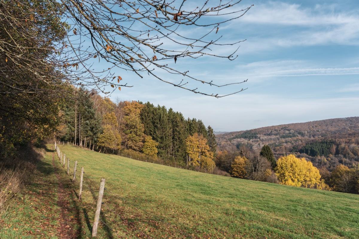 Herbst auf dem Primstaler Panoramapfad