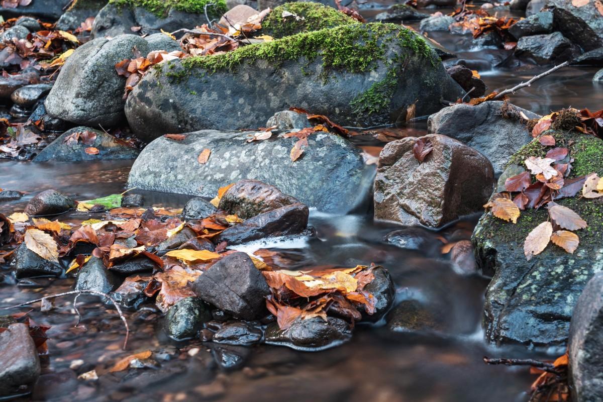 Langzeitbelichtung mit Herbstfarben im Wald bei Primstal