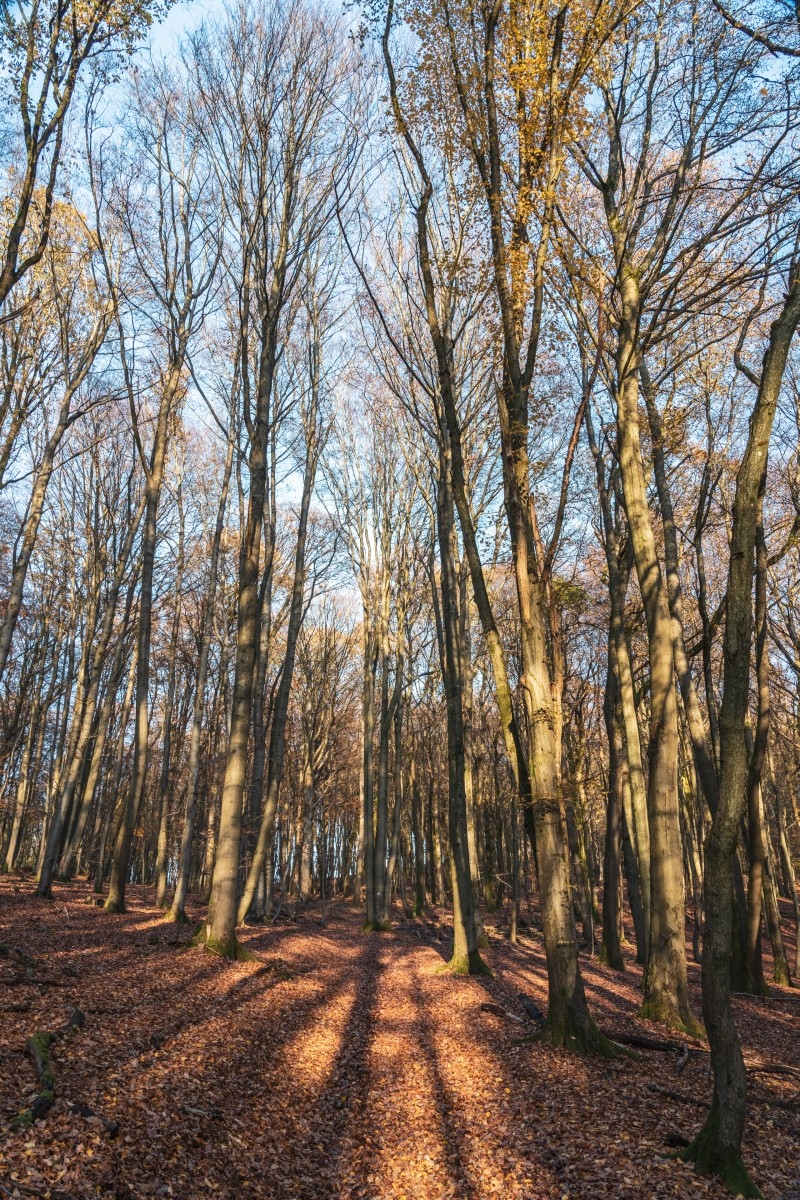 Wald bei Primstal in der Abendsonne