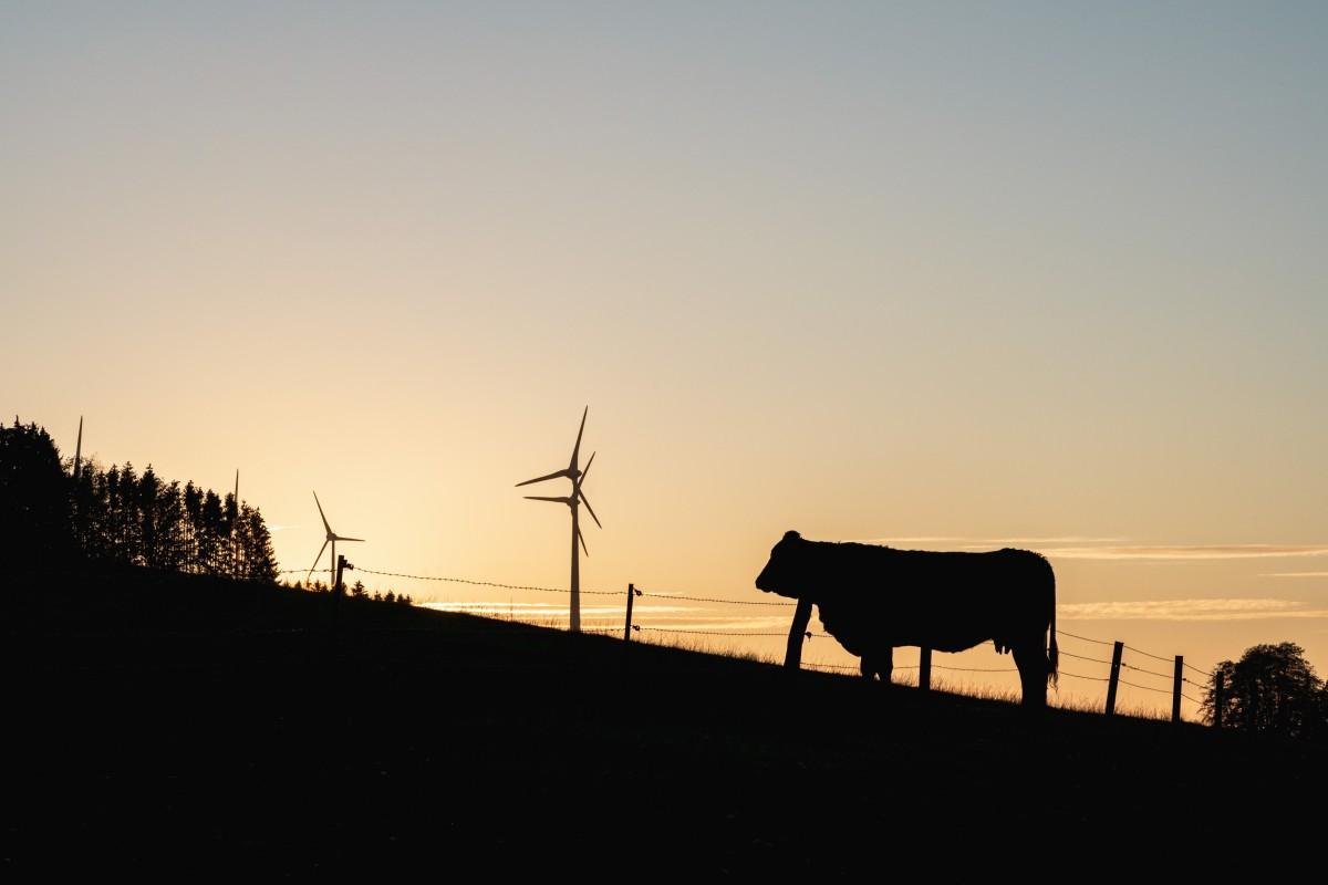 Silhouetten im Sonnenuntergang bei Primstal im Saarland