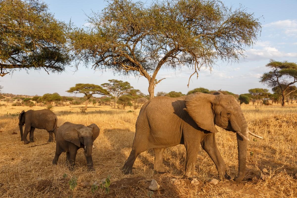 Elefanten im Tarangire National Park