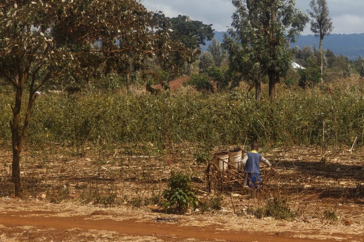 Massai-Junge mit Karren