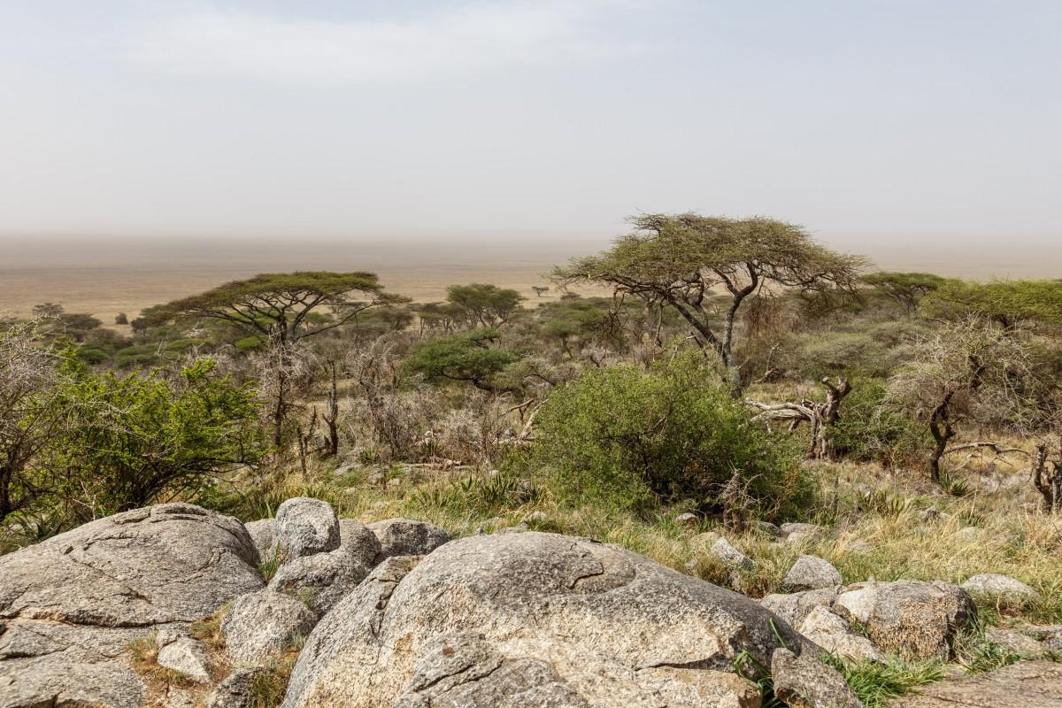 Panorama auf den Serengeti National Park