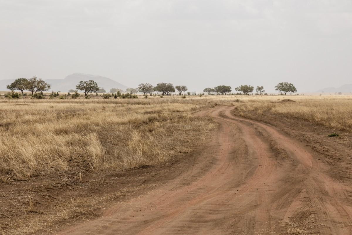 Straße im Serengeti National Park
