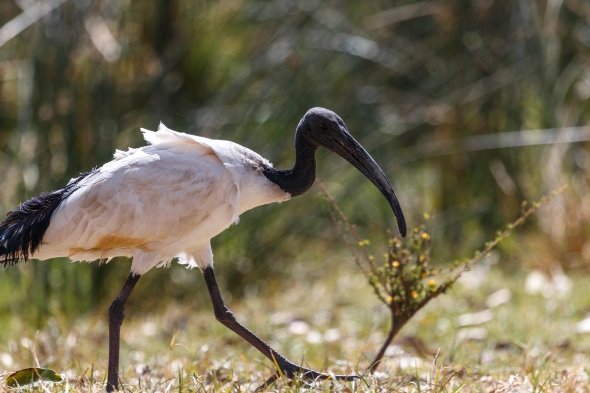 Vogel im Ngorongoro-Krater