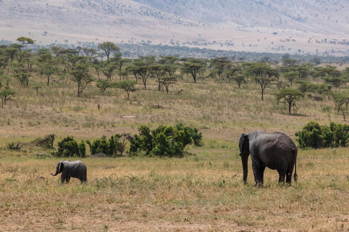Elefanten im Serengeti National Park