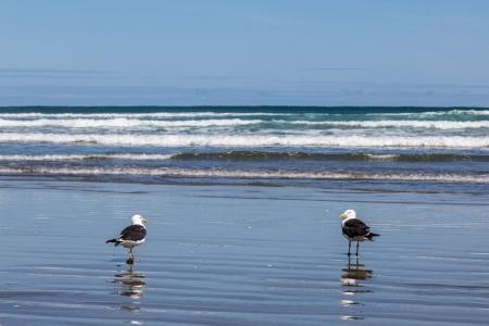 Vögel am 90 Mile Beach