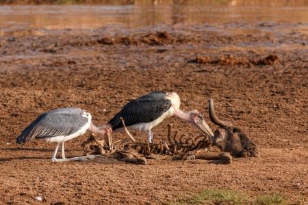 Vögel im Tarangire National Park