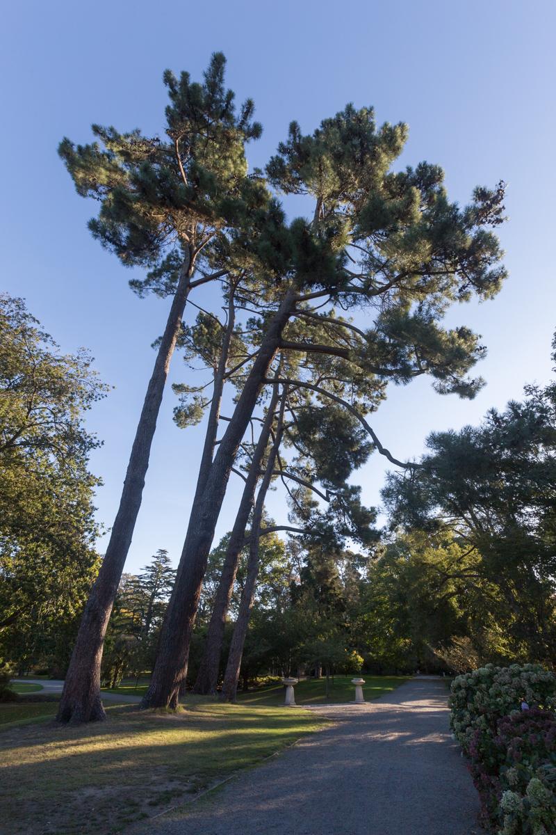 Botanischer Garten von Christchurch