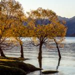 Herbststimmung am Lake Wanaka & Lake Hawea
