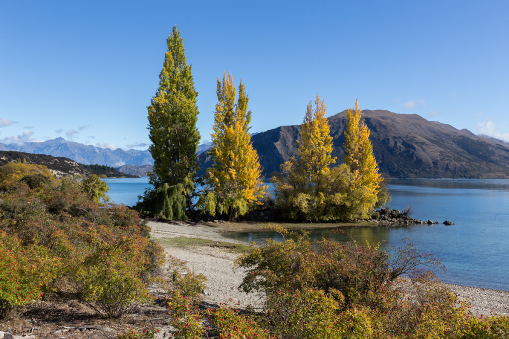 Herbst am Lake Wanaka