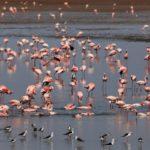 Vogelhochzeit im Lake Manyara National Park