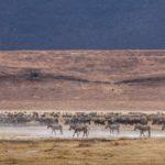 Die abenteuerliche Fahrt durch den Ngorongoro-Krater