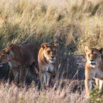 Fotografieren auf Safari – ein Erfahrungsbericht aus Tansania