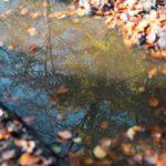 Herbst auf dem Wildnis-Trail Weiskirchen im Hochwald